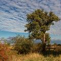Strom se stádem bílých beránků