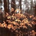 Podzimní příchod jara
