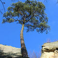 Sám v Čertových skalách
