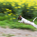 V běhu