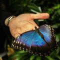 Motýl v lidské péči :)