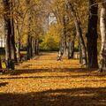 podzimní odpoledne  ( z archivu )