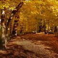 Cesta zlatým podzimem