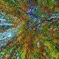 Podzimní vrba