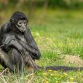 Opička na louce