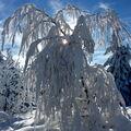 Pocukrovaný strom