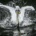 Tanec na vodě