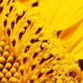 Včeličkám
