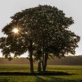 opomíjený strom
