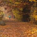 Cesta mezi duby