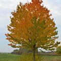 Strom podzimu