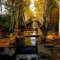 Stavidlovka podzimní