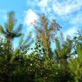 Kousek mladého lesa