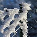 Námraza na plotě II.