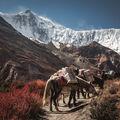 Setkání v Himalájích