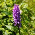česká orchidej