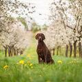 Airis vítá jaro