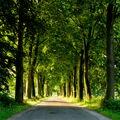 Cestička k domovu