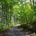 Les v Chřibech