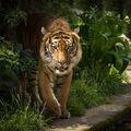 Divočina v zoo