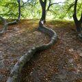 Jako hadi