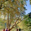 Strom roku České republiky 2014