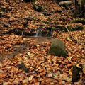 Zlatavý podzim.