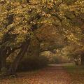 V podzimním parku