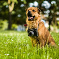 Jake, the Photographer!