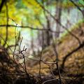 Šeptání stromů