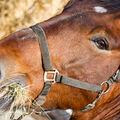 Pohled koně