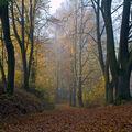 Podzimní cestou