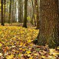 podzimní koberec