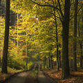 Slunce v podzimním lese.