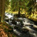 Šumavská podzimní víla
