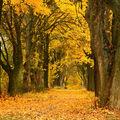 Cesta stromů aneb podzimní alej