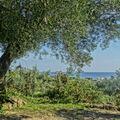 Ve stínu oliv