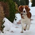 Pes v běhu.