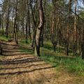 ...v lese borovém...