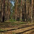 ...v lese borovém ll. ...