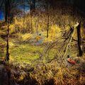 Námluvy v lužním lese