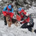 Pes, rychlá pomoc zasypaným v lavině