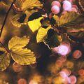 Pod korunami stromov