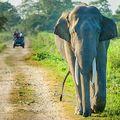 Divoký slon