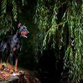 V zajetí vrby