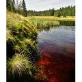 ...Rolavský rybník...