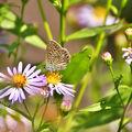 Motýl a květina