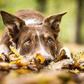 Roztomilost v podzimních barvách
