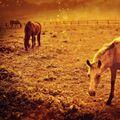 Podzim u koní