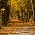Podzimní stromořadí